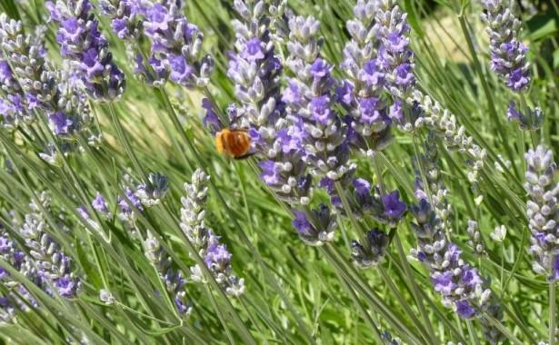 Fiori e animali selvatici nel Parco del Subasio - Assisi