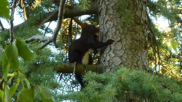 Fauna Subasio - Lo scoiattolo che ha mangiato tutte le noci!