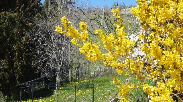 Flora del Subasio - Aprile: il saluto della primavera